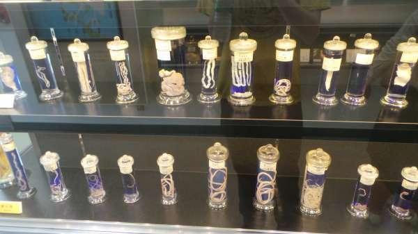 muzium parasitologi meguro
