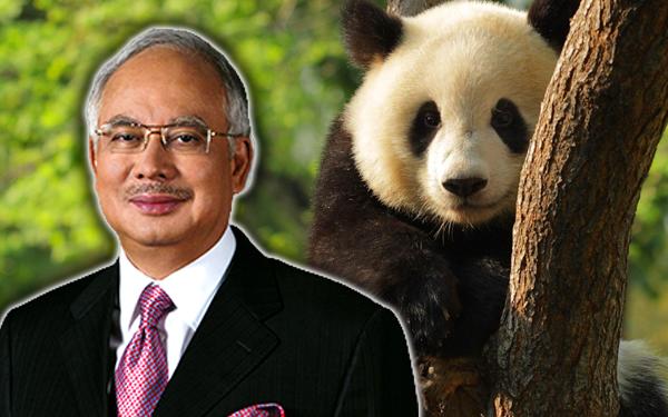 najib razak dan panda hadiah dari china