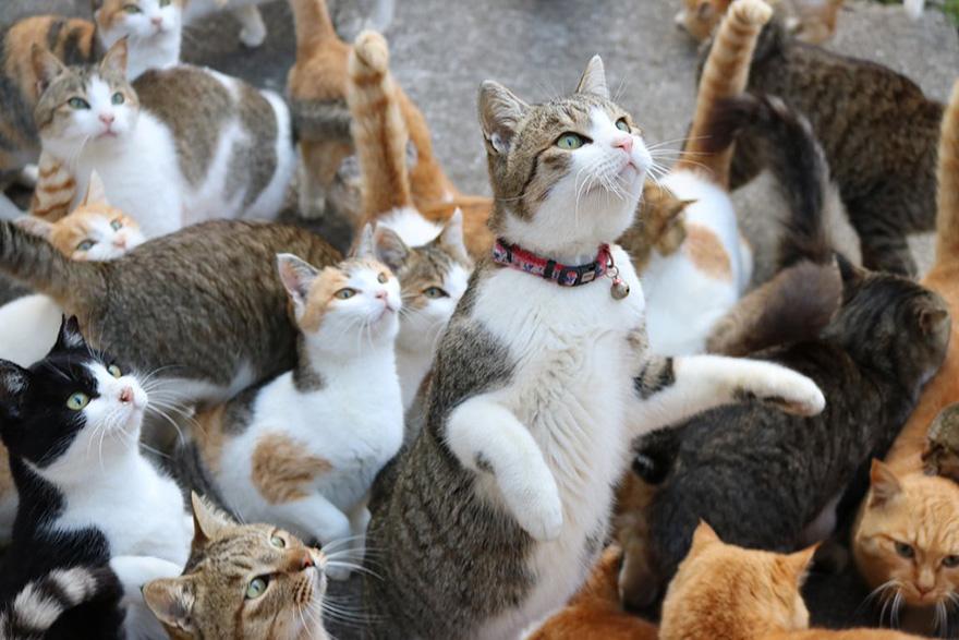 negara paling banyak pemilik kucing