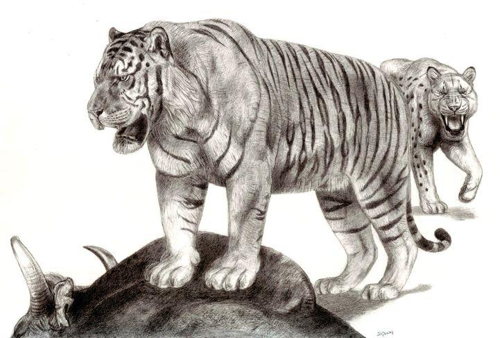 ngandon tiger