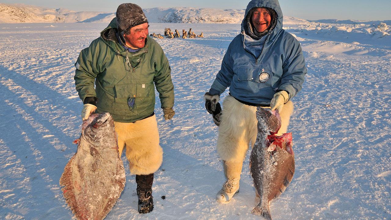 orang asli greenland banyak makan ikan
