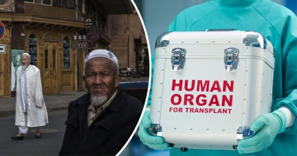 orang islam uyghur menjadi mangsa penuaian organ hidup