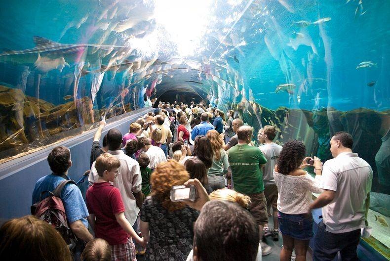orang ramai tidak melepaskan peluang melawat akurium paling besar di dunia