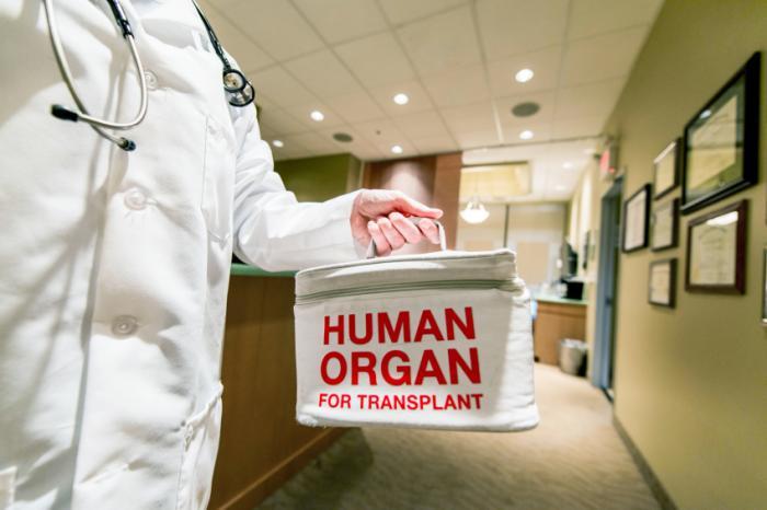 organ manusia 550