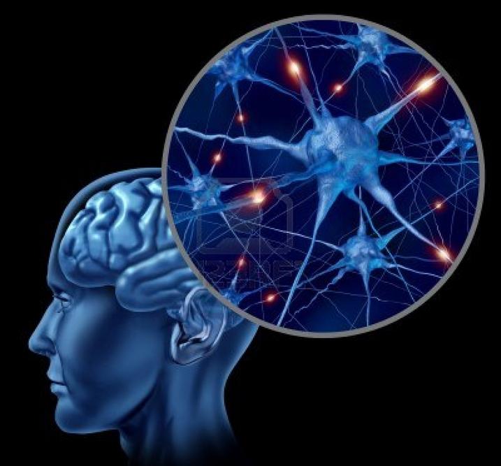 otak dan navigasi