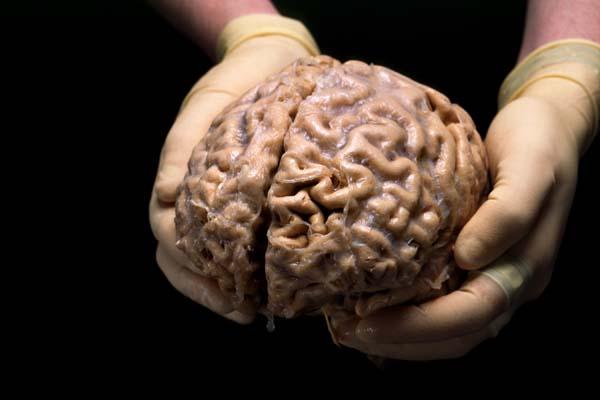 otak manusia sains alquran