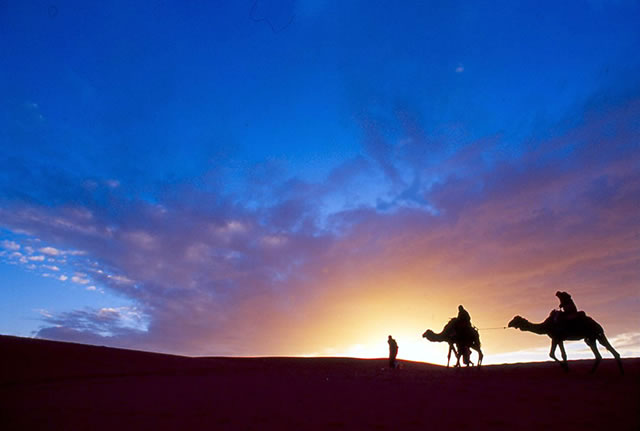 padang pasir unta langit biru
