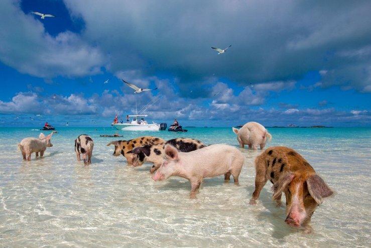 pantai khinzir bahamas destinasi pelancongan popular yang dirosakkan pelancong 2