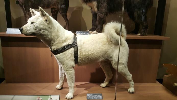 patung hachiko di muzium