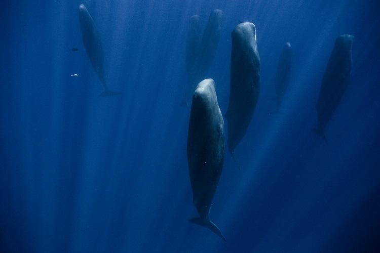 paus sperma 8 haiwan dengan tabiat tidur yang pelik dan unik