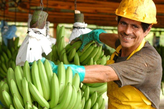 pekerja di ladang pisang costa rica