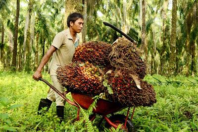 peladang kelapa sawit ipo terbesar malaysia