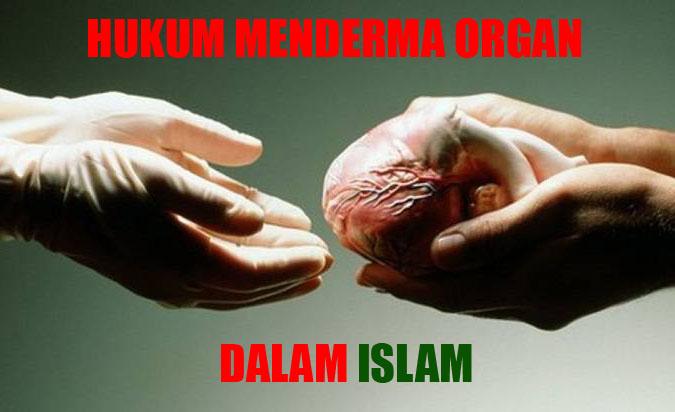 pendermaan dan pemindahan organ dalam islam