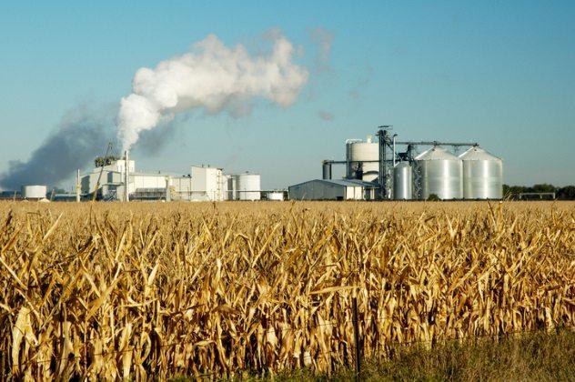 penghasilan minyak daripada jagung