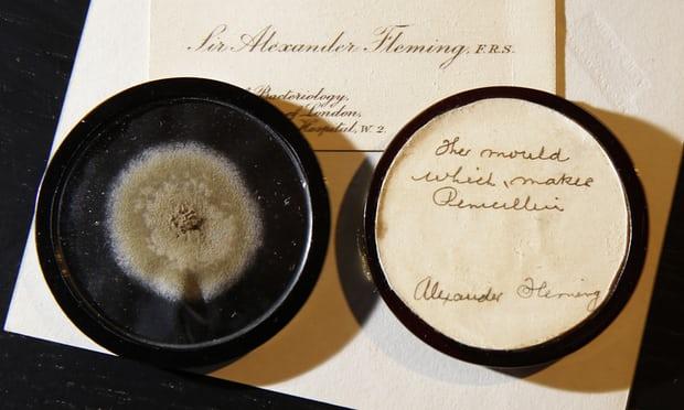 penicilin piring petri 656