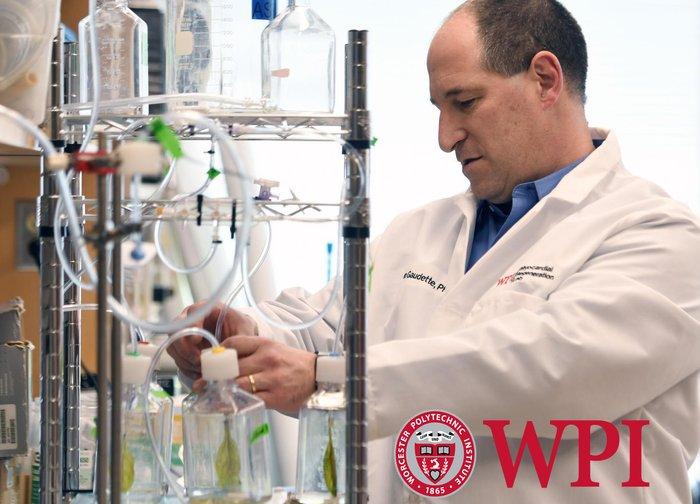 penyelidik worcester polytechnic institute