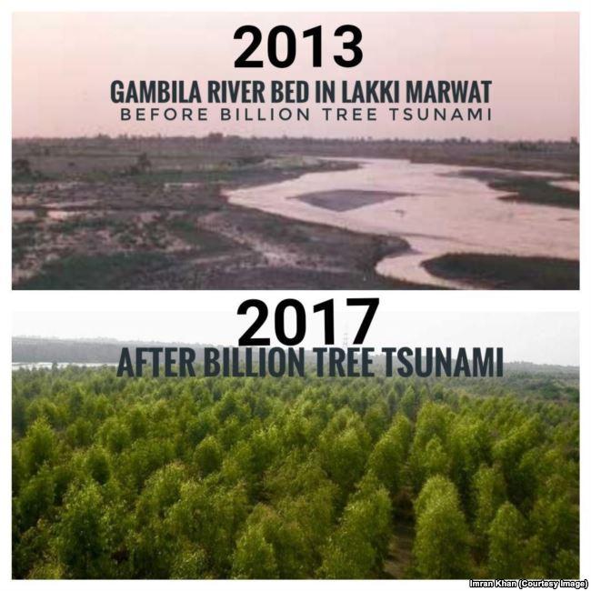 perbezaan ketara hutan di pakistan
