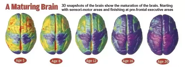 perkembangan otak sejak kecil