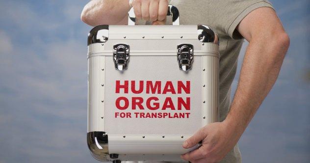 peti simpanan organ manusia untuk dipindahkan