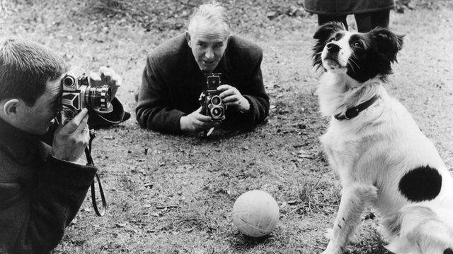 pickels anjing yang menemukan trofi piala dunia 438