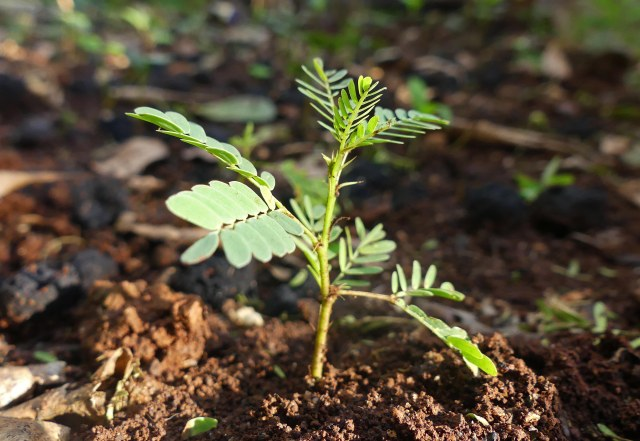 pokok bercambah dari seedball