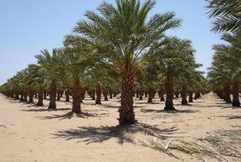 pokok dan tanaman subur menghijau keajaiban kelahiran nabi muhammad saw rasulullah irhas