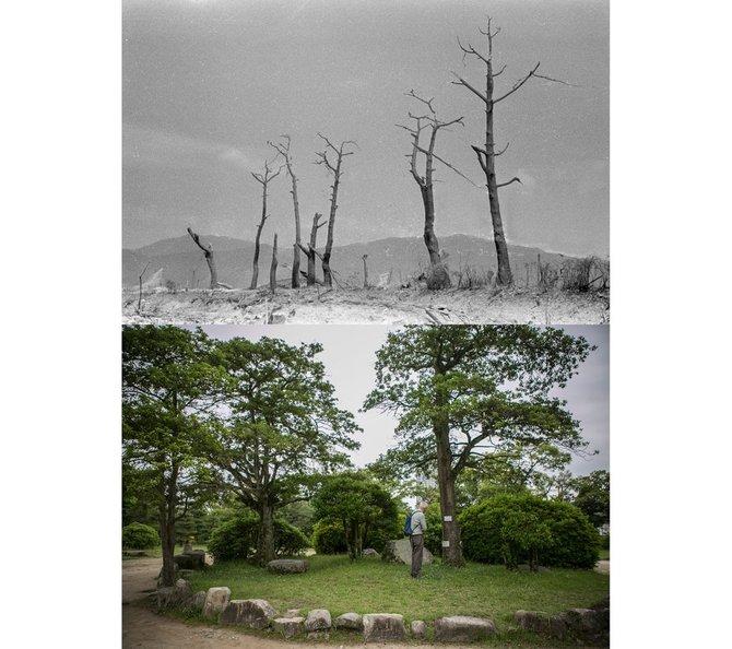 pokok di istana hiroshima