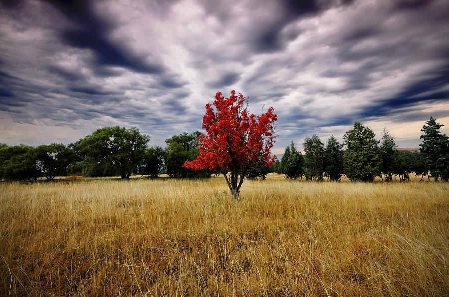 pokok di tengah padang