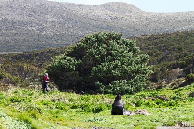 pokok paling terpencil dan kesunyian di dunia sitka spruce new zealand 3