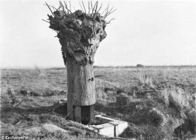 pokok palsu 2