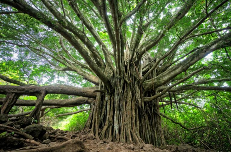pokok thumbnail