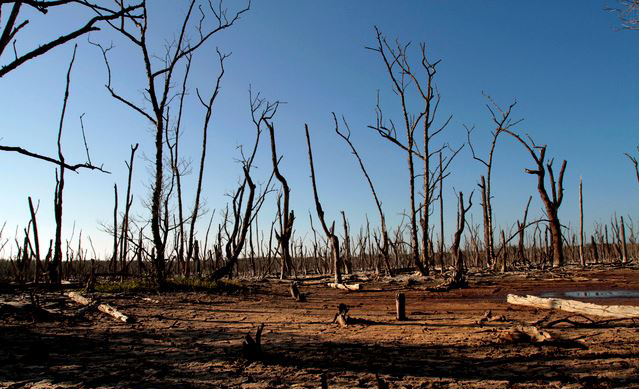 pokok tumbuhan mati dan ekosistem hancur