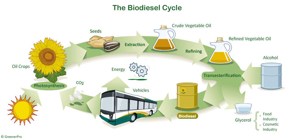 biofuel ethanol alternative to transportation essay Ethanol fuel is ethyl alcohol an alternative process to produce bio-ethanol from algae is being developed by the company sustainable ethanol: biofuels.