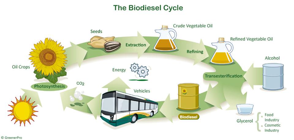 proses menghasilkan biodiesel