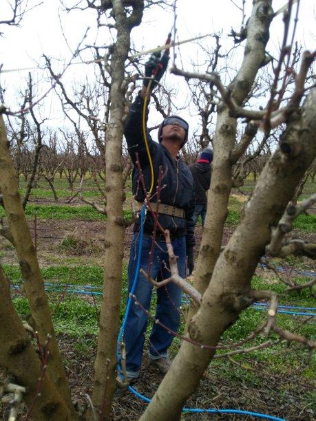 pruning 2 844