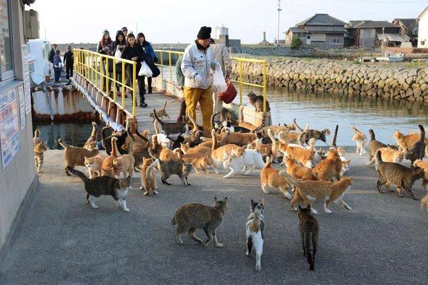 pulau kucing 8 lokasi wajib dilawati di jepun 2