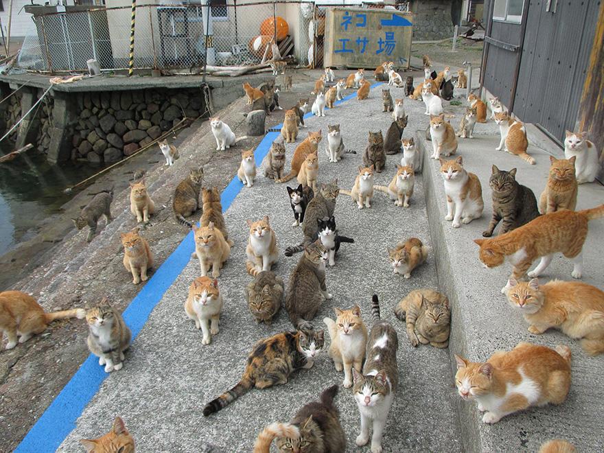 pulau kucing 8 lokasi wajib dilawati di jepun