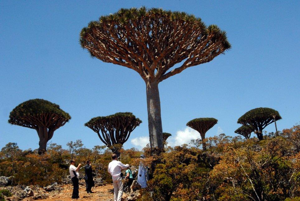 pulau socotra 5 pulau paling misteri di dunia 2