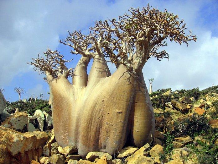 pulau socotra 5 pulau paling misteri di dunia 4