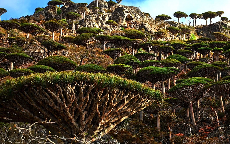 pulau socotra 5 pulau paling misteri di dunia