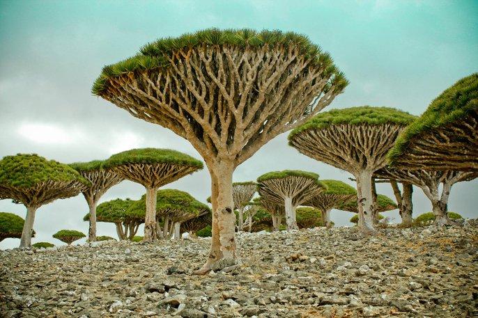 pulau socotra yaman tempat alien
