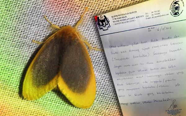 rama rama toxoproctis hemibathes di malaysia 112