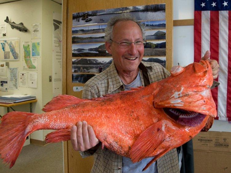 rockfish makhluk umur paling lama
