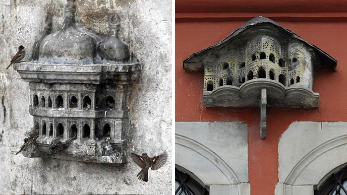 rumah burung turki