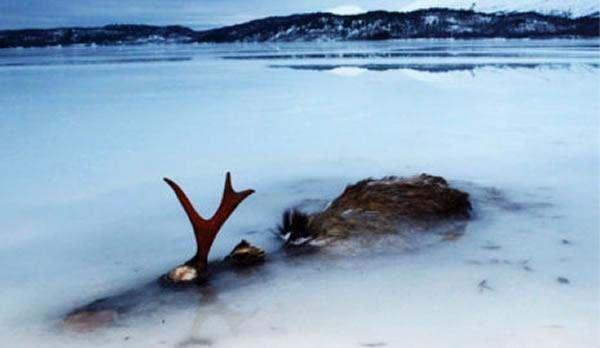 rusa elk mati sejuk beku