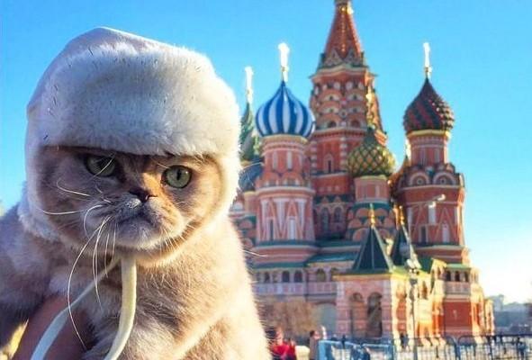 russia paling gemar kucing di dunia