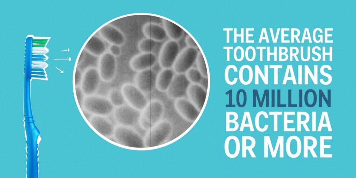 sanggupkah anda menggunakan berus gigi yang penuh dengan bakteria