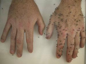 sebelah tangan disapu losen anti nyamuk sebelah lagi dibiarkan kosong