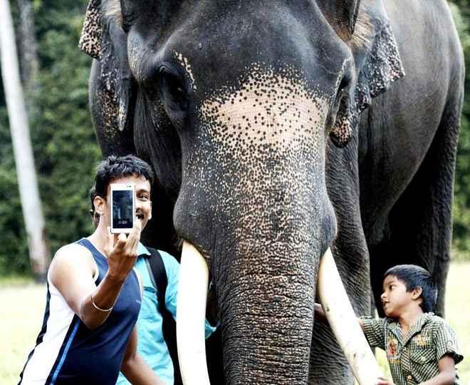 selfie dengan gajah