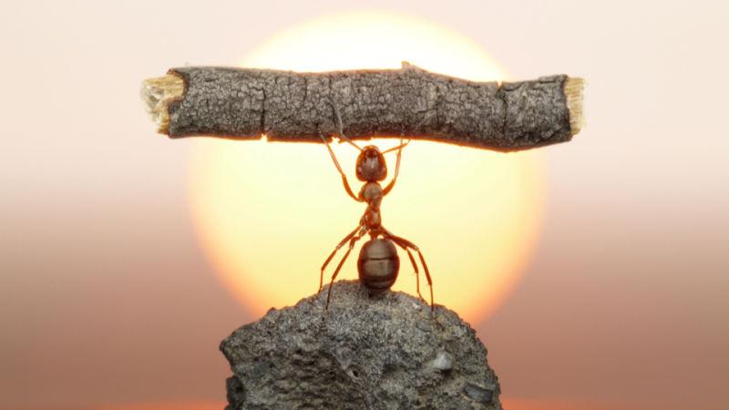 semut mempunyai kekuatan luar biasa